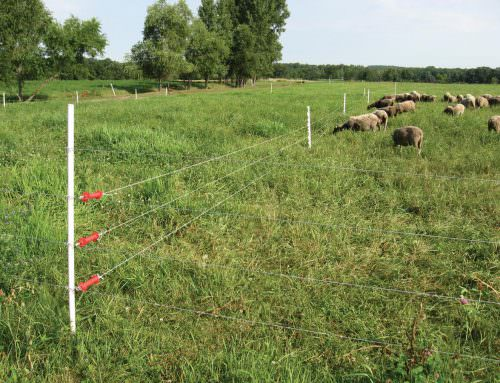 Electric Fencing – All You Need To Know